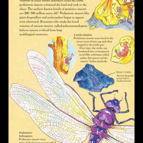 Young Naturalist's Handbook: Insect-lo-pedia