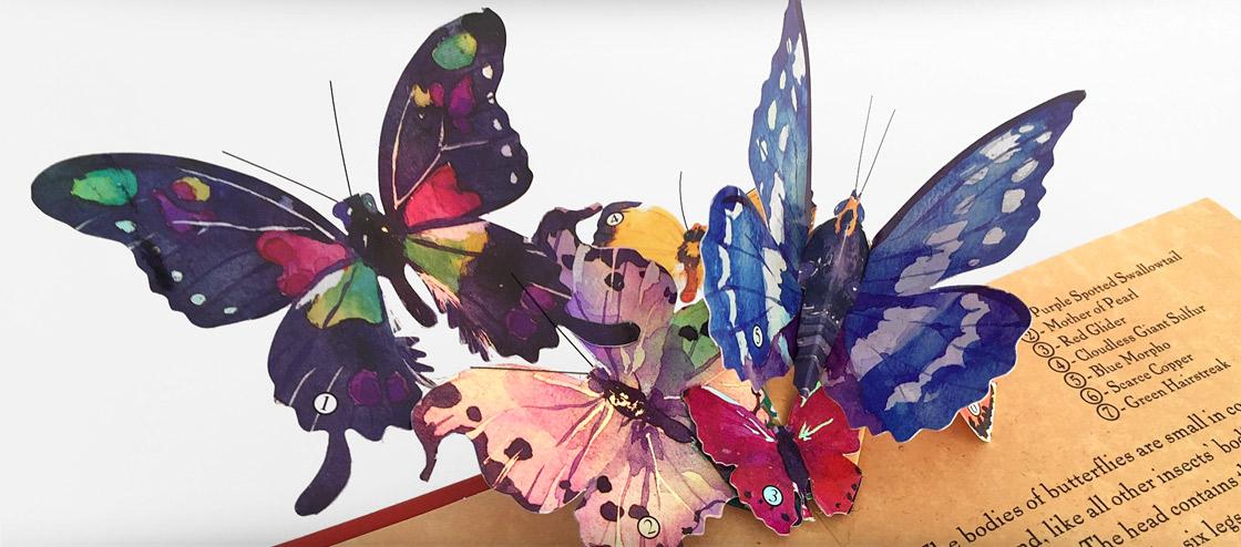 Young naturalist's Pop-Up Handbook Butterflies